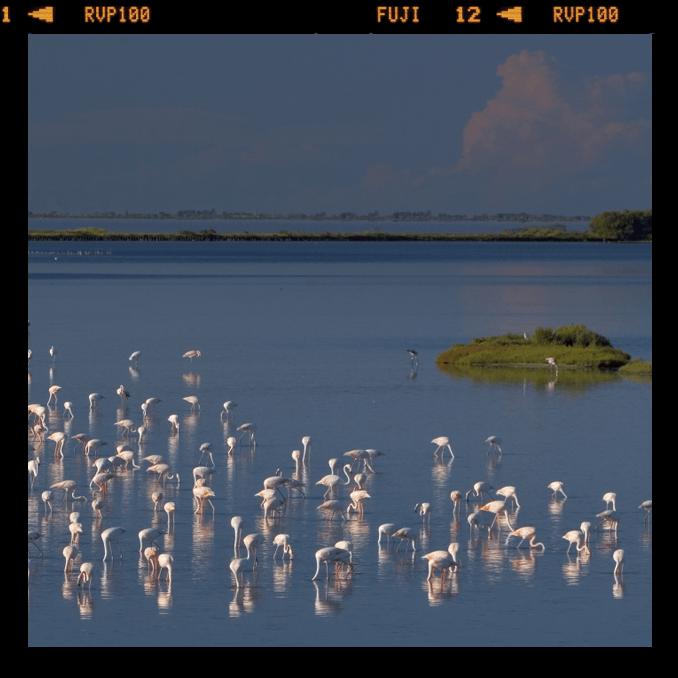 parco delta po osservatorio uccelli