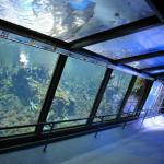 Corridoio interno dell'acquario di Cattolica