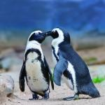 Pinguini dell'acquario di Cattolica