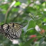 casa delle farfalle a Milano Marittima