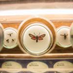 Mostra delle farfalle a Milano Marittima