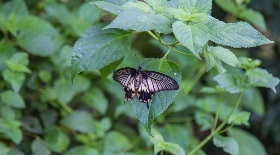 Casa delle Farfalle di Cervia