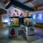 percorso educativo casa degli insetti