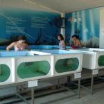 Vasche con tartarughe nella fondazione cetacea Riccione